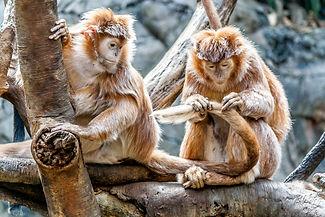 primat2.jpg