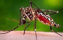 Mosquito Pic.jpg