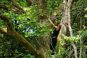 in tree.jpeg