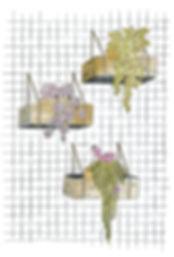 Plantas y tiestos.jpg