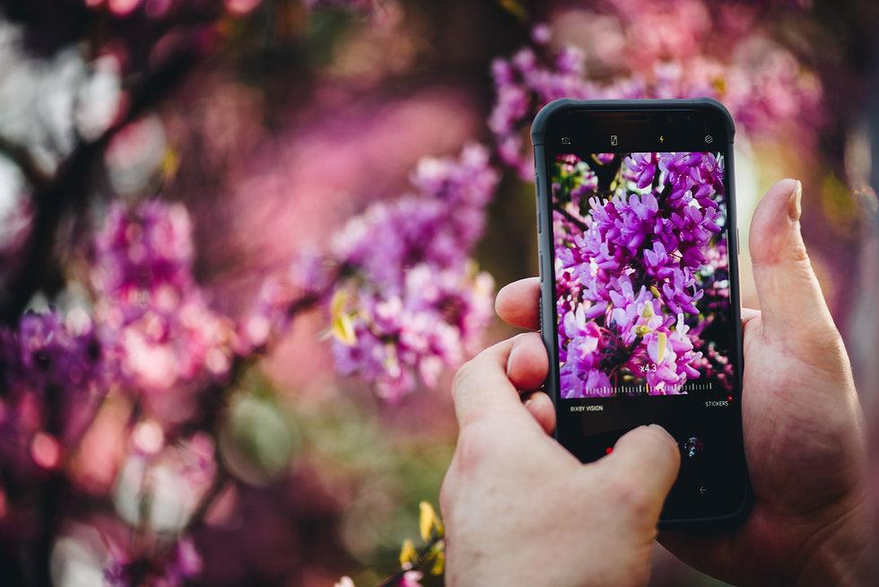 Lilac-Festival-2018-472.jpg
