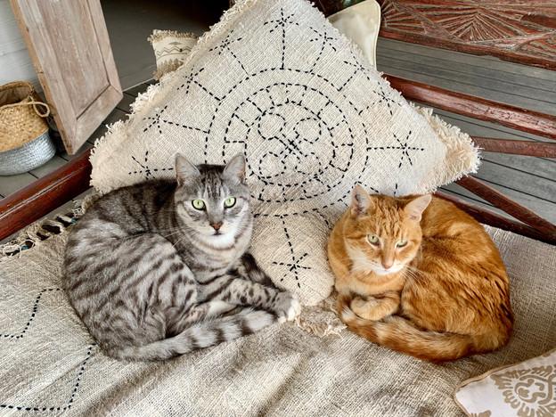 Shiva et Saï Baba, les chats de la maiso