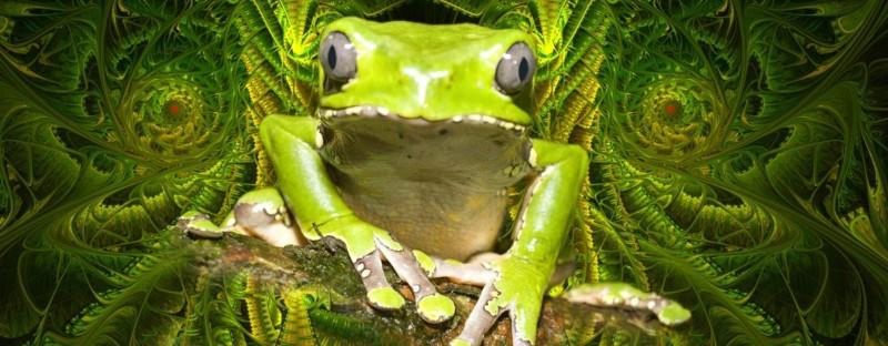 Mon expérience avec le KAMBO, la médecine ancestrale de la grenouille géante de la forêt amazonienne