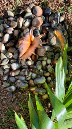 Fruits de mer du platier devant la propriété