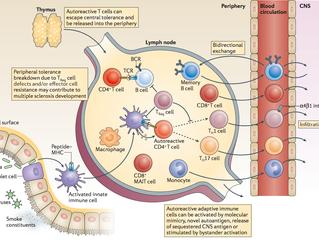 Immunopathology of multiple sclerosis