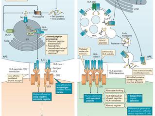 HLA variation and disease