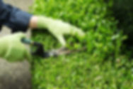 Gartenunterhalt Bern