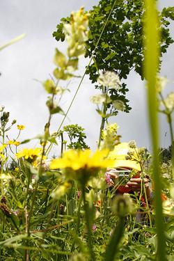 Blumenwiese, Kleinwalsertal
