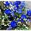 Thumbnail: Bouquet Style Blue