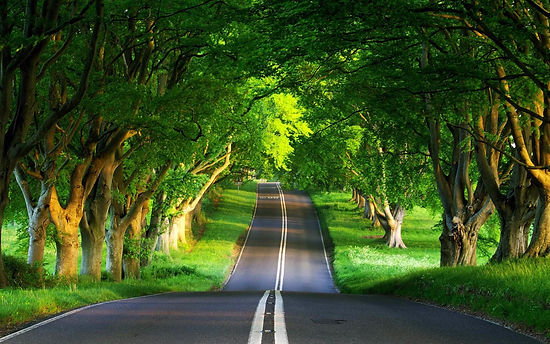 Дорога, уходящая вдаль, между деревьями