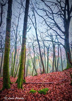 cleddon trees 3.jpg