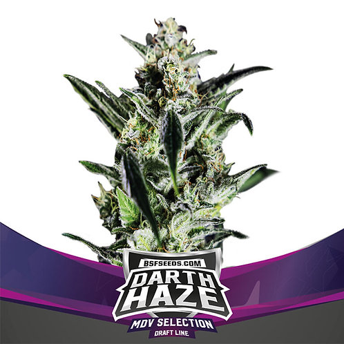 FEM - DARTH HAZE X7 UNIDADES