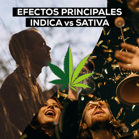 EFECTOS PRINCIPALES INDICA vs SATIVA