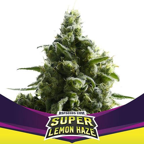 FEM - SUPER LEMON HAZE X12 UNIDADES