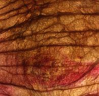 peau végétale4.jpg