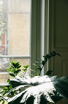 plant by window