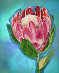 Pink Protea.