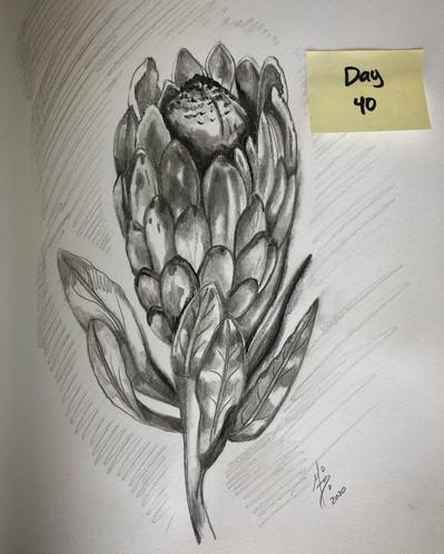 Pink protea (gray)