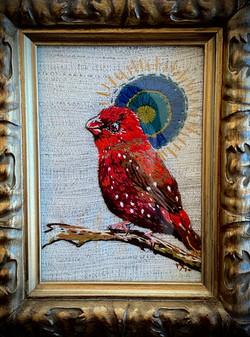 Strawberry Finch bird