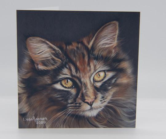 Cat (Rory)