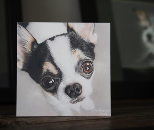 Chihuahua (Brooks)