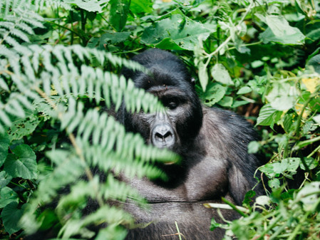Bwindi Inpenetrable Forest