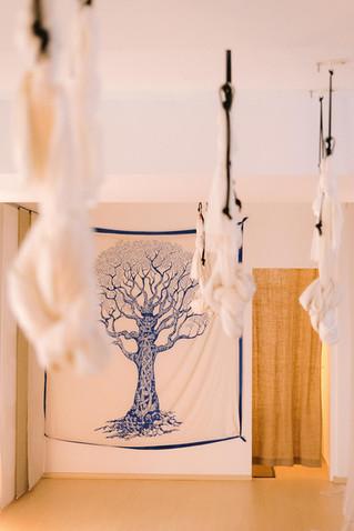 Aerial Yoga / Tree of Life