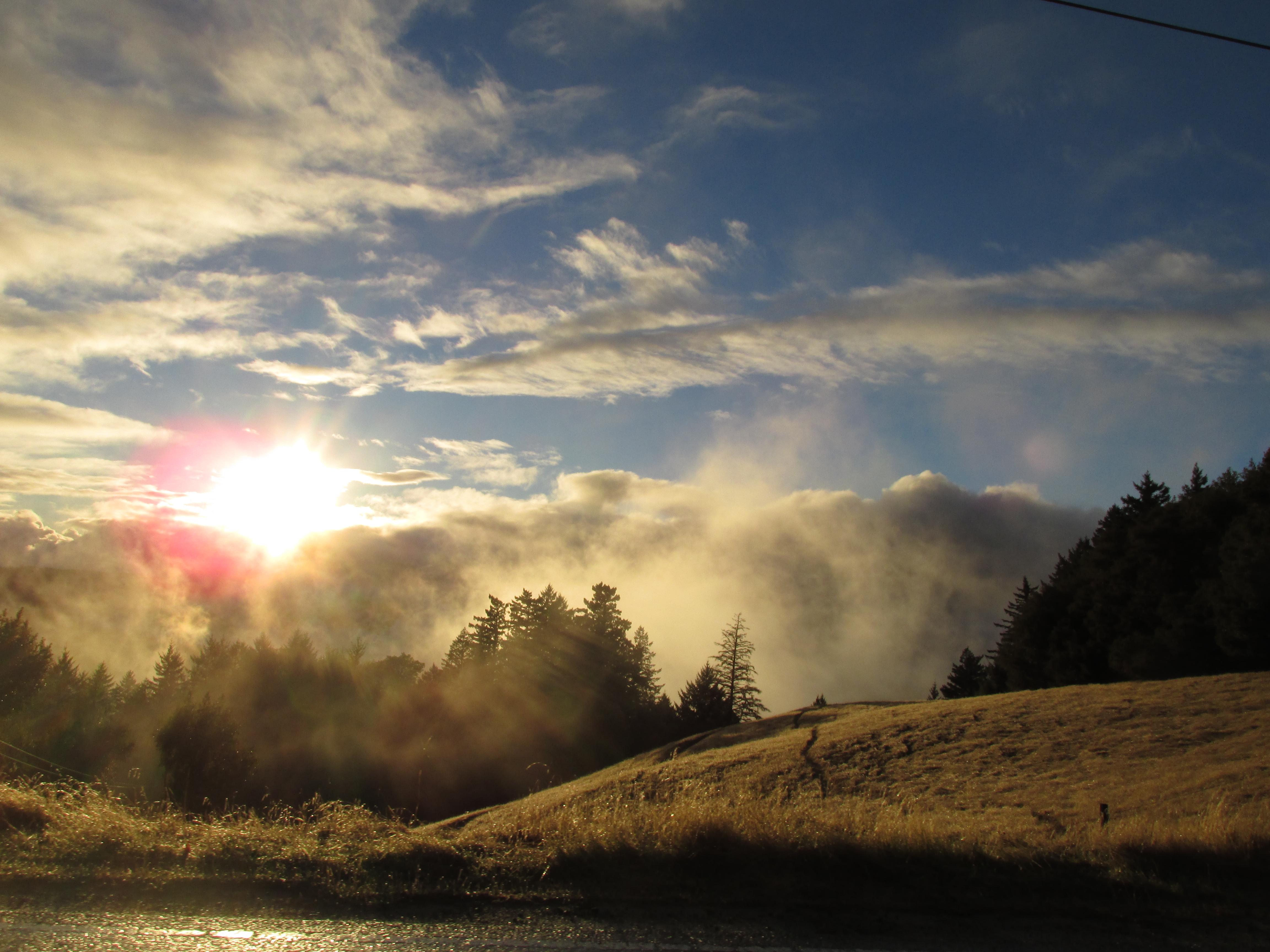 2013.11.20_IMG_5335 - Misty Redwoods !!!!
