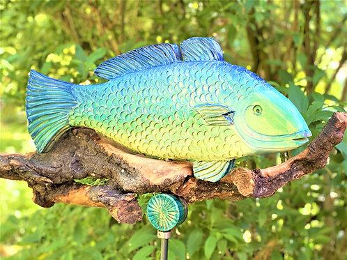 Fisch Forelle