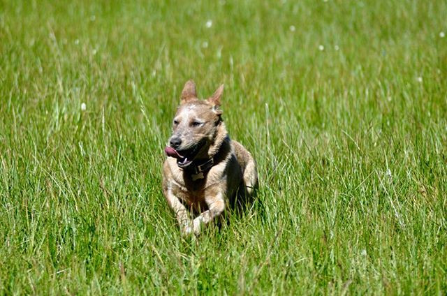 Romping through the meadow, not a care i