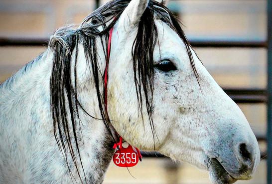 Mustang 3359