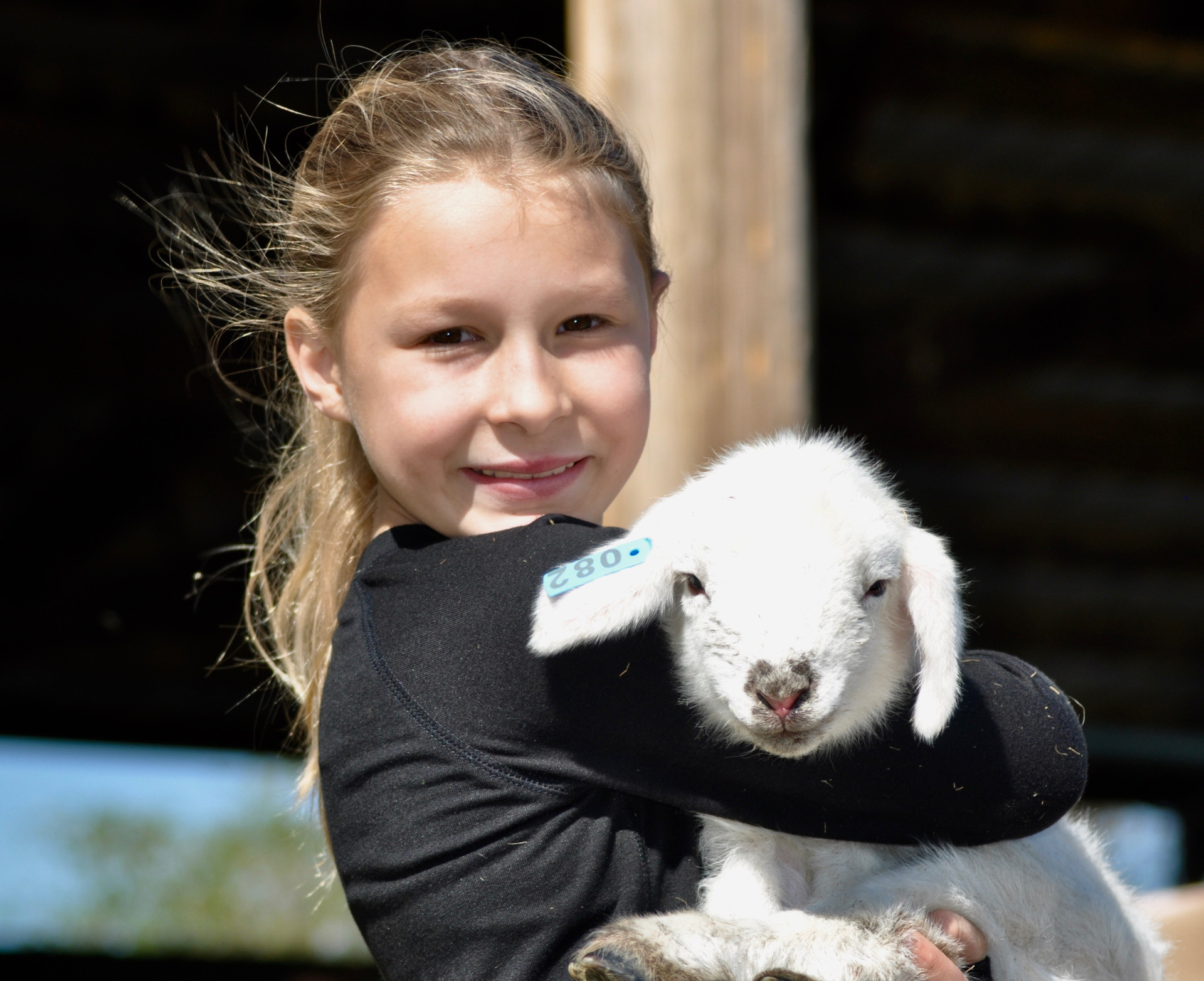 Harper had a little lamb