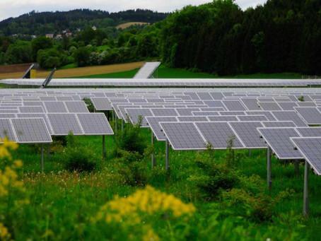 Plantas solares con nidos y casas de insectos: así quiere ser más verde la energía verde