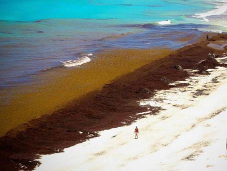 Sargazo: analizarán si se produce por culpa de la minería en Brasil