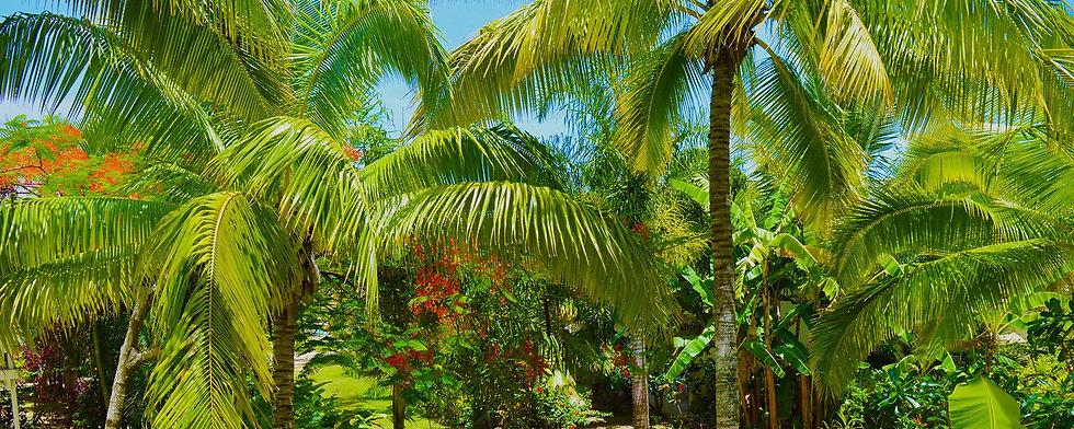 Coconut%20tree%20grove%20from%20the%20Ga