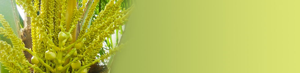 Health and Wellbeing - Banner Image.jpg