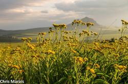 Eastern Free State landscape © Chris
