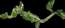 PinClipart.com_rose-bush-clip-art_557993