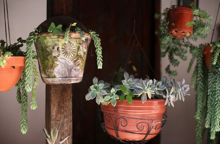 small-room-plants.jpg