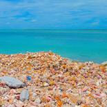 The beautiful conchs of Bimini in the Bahamas