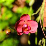 Amazing Island Nature: the Elegant Orchid