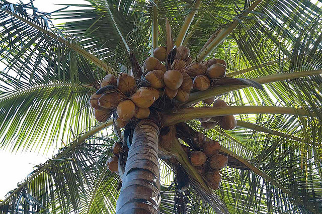 Island Runaways palm tree