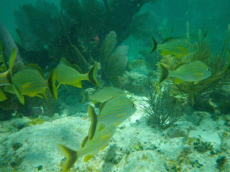 Snorkeling Key Largo