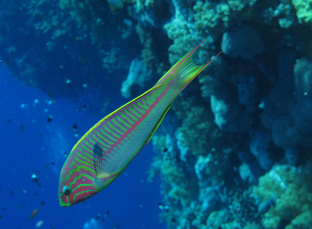 Snorkeling the Bahamas