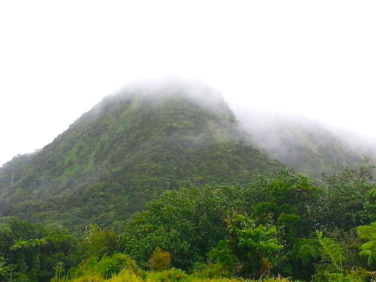 Martinique Route de la Trace