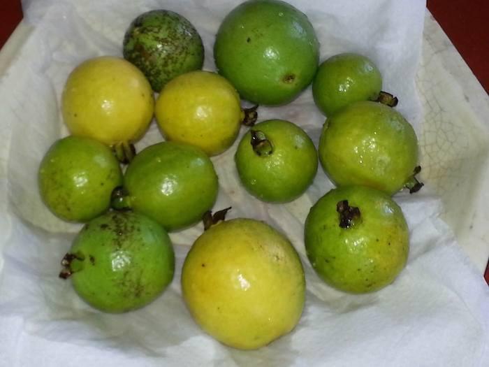 Island Runaways fruit