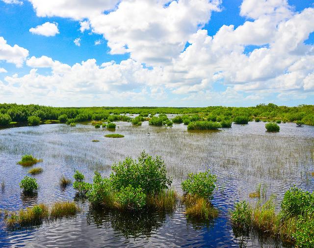 ten thousand islands Everglades