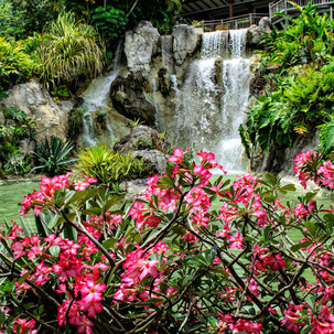 Break from the beach: Beautiful botanical gardens in Guadeloupe