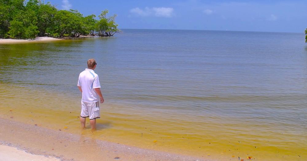 Ten Thounsand Islandds Everglades