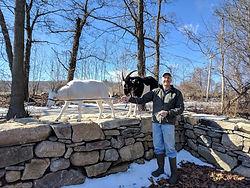 Leo Sharkey with goats